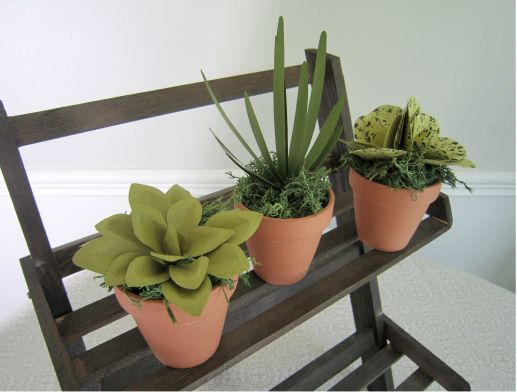 Potted Succulents 2